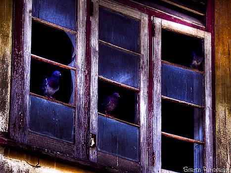 Bird House by Sarita Rampersad