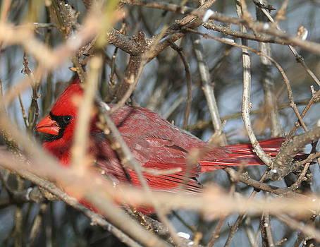 Diane Merkle - Bird in a Bush