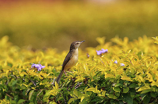 Bird in a Garden by Sandeep Gangadharan