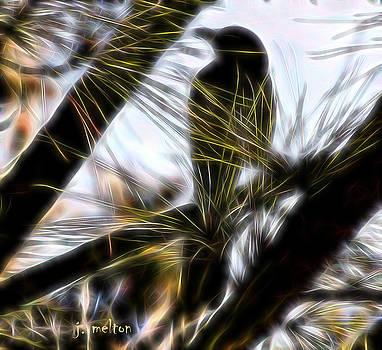 Bird in a Pine by Jack Melton