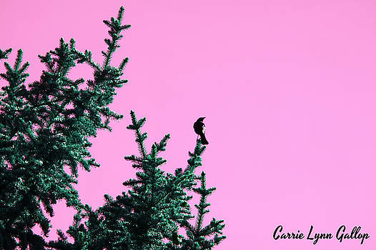 Bird In A Tree - Art Pink by Carrie Gallop