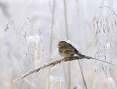 Bird in first Frost by Paul Ross