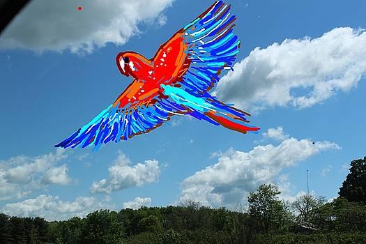 Anand Swaroop Manchiraju - BIRD IN FLIGHT