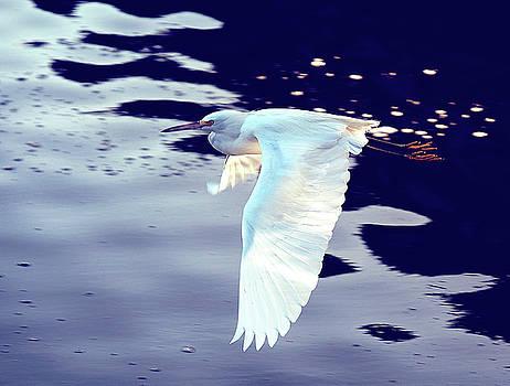 Bird in Flight by Charles Van Riper