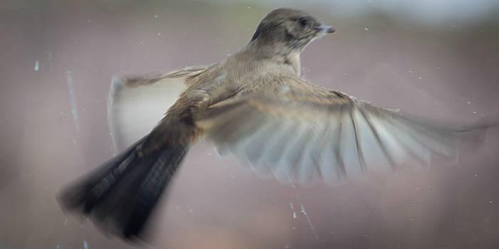 Bird In Flight by Jodi Vetter