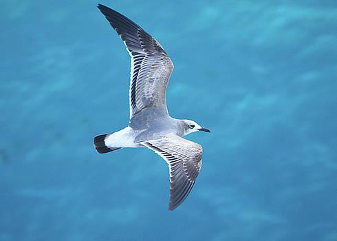 Bird in Paradise by Debbie Morris