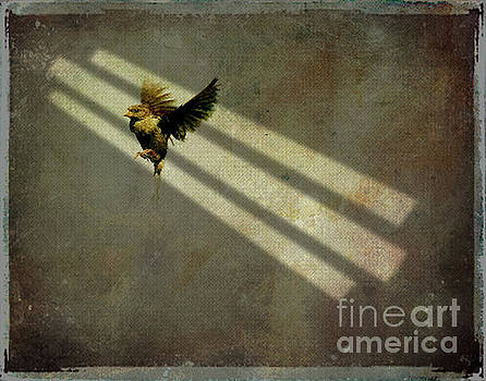 Bird in shaft of light by Jim Wright