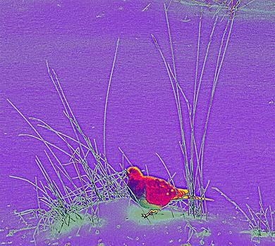Bird In The Grass by Becky Kurth