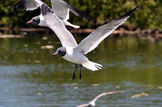 Bird In The Keys  FL by Jerry Frishman