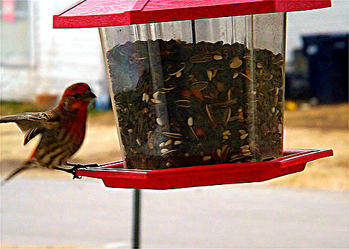Colette Merrill - Bird landing on birdfeeder