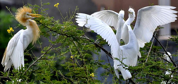 Bliss Of Art - Bird life