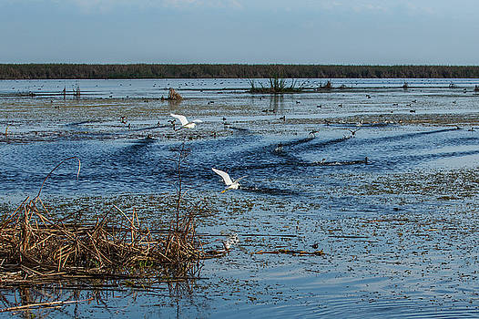 Bird Life, Lake Okeechobee by Richard Goldman