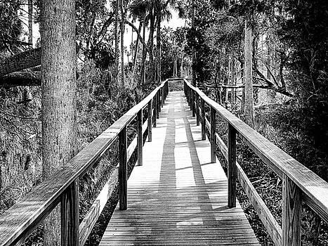 Bird Lookout Walkway by Mario Carta