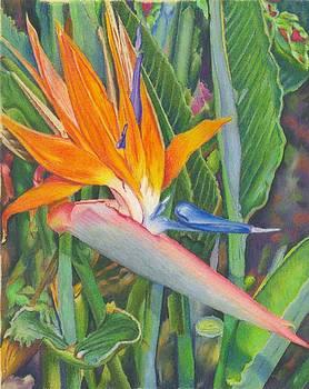 Bird O Paradise by Robynne Hardison