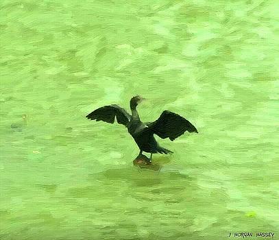 Bird of Kerala by J Morgan Massey