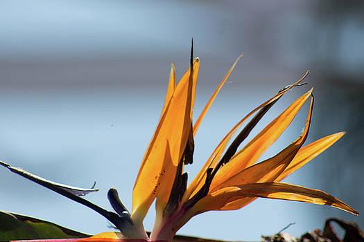 Bird of Paradise 2 by Jodi Vetter