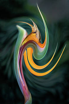 Rick Strobaugh - Bird of Paradise Abstract 2