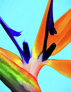 Bird of Paradise Abstract by Jan Hagan