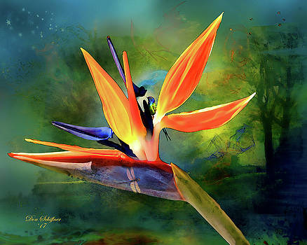 Bird of Paradise by Don Schiffner