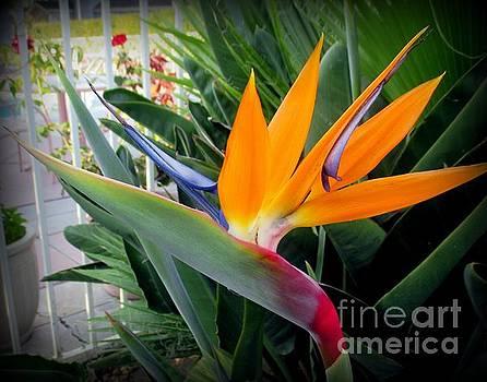 Bird of Paradise Flower by Joy Patzner