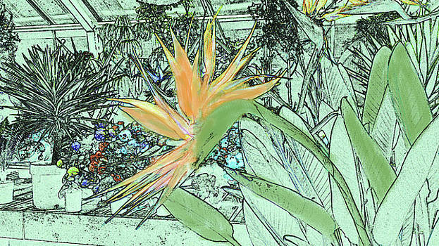 Bird of Paradise in the Hothouse by Nareeta Martin