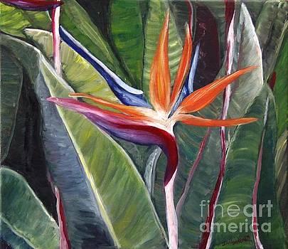 Bird of Paradise by Isabel Honkonen