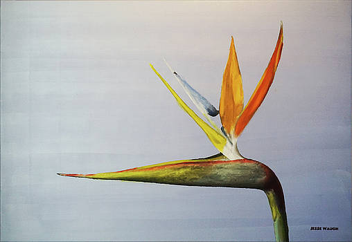Bird of Paradise by Jesse Waugh