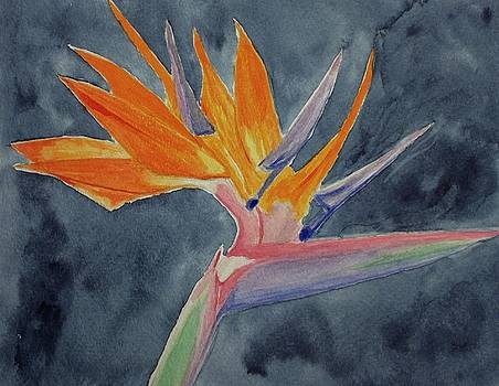 Bird of Paradise, Midnight by Nick Young