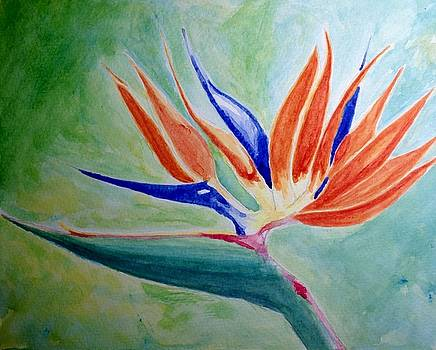 Bird of Paradise, Noon by Nick Young