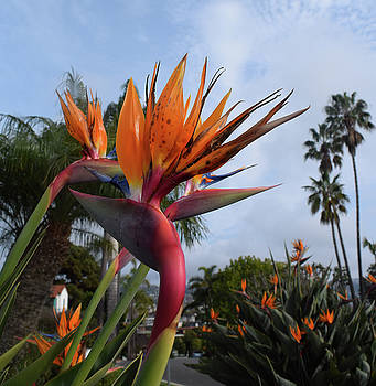 Bird Of Paradise Peace and Joy by Phyllis Britton
