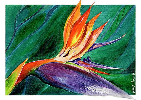 Bird of Paradise Study by Janis Grau