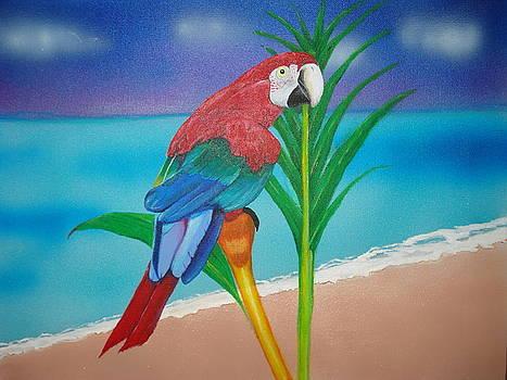 Bird of Paradise by Tonya Hoffe