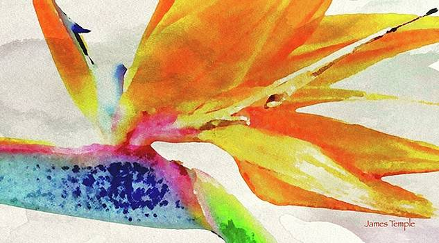 James Temple - Bird of Paradise Digital Watercolor