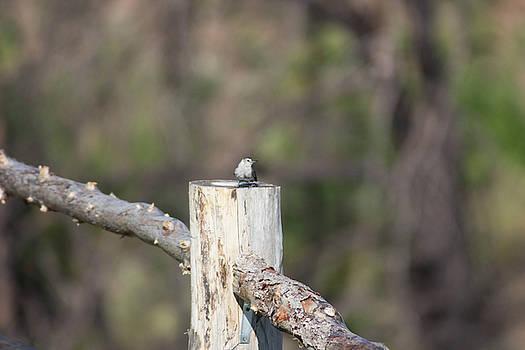 Bird On A Fence by Jodi Vetter