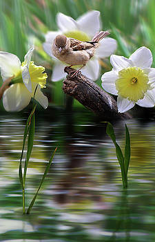 Bird on a Limb by Nina Bradica