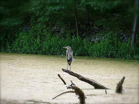 Sherri Williams - Bird on a Log