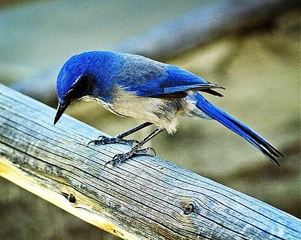 Marty Koch - Bird on a Rail