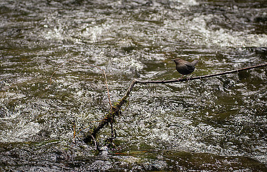 Bird on a River by Trance Blackman