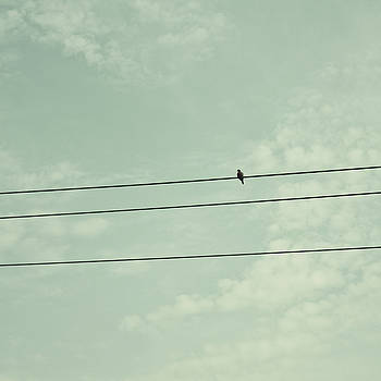 Bird On A Wire - Minimalist Photo by Dylan Murphy