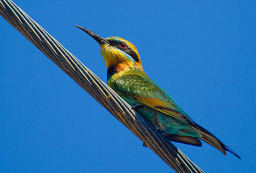 Bird on a wire by Mr Bennett Kent