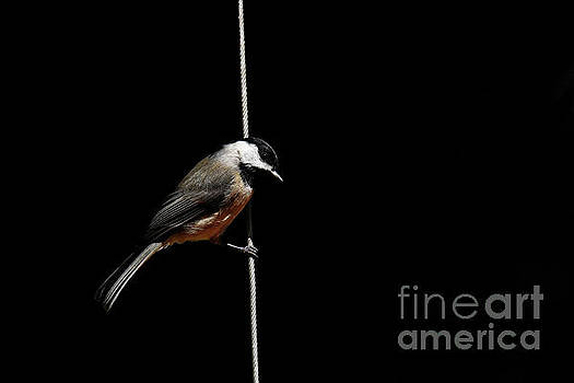 Bird On A Wire by Paul Mashburn