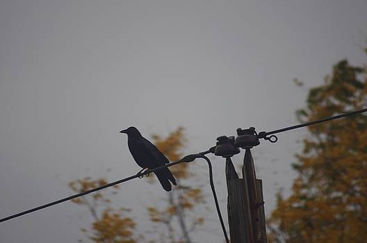 Bird On A Wire by Thomas  MacPherson Jr
