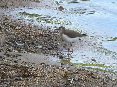 Bird on the Beach by Lynn Harrison