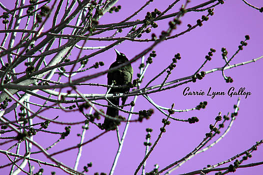 Bird On Branch - Purple by Carrie Gallop