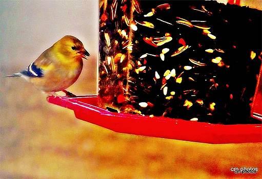 Colette Merrill - Bird on Feeder