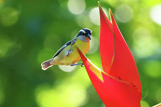 Bird on Red Flower by Ann Sullivan