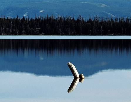 Bird or Log by Philip Bobrow