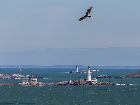 Bird over Boston and Graves Lighthouses by Brian MacLean