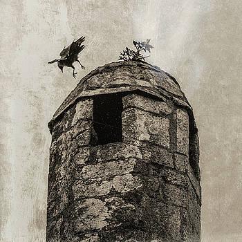 Andrew Wilson - Bird Over Tower