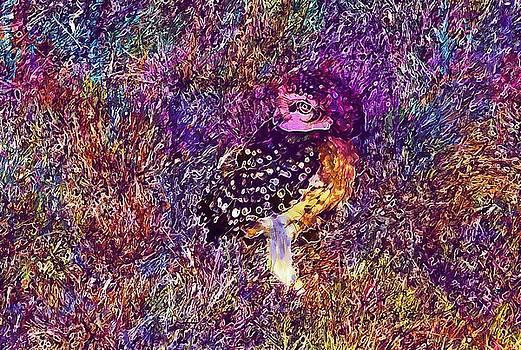 Bird Owl Spotted Owlet Athene Brama  by PixBreak Art